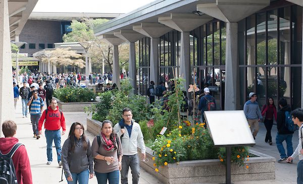 Students walk to class along the quad at UIC, past a blooming garden.