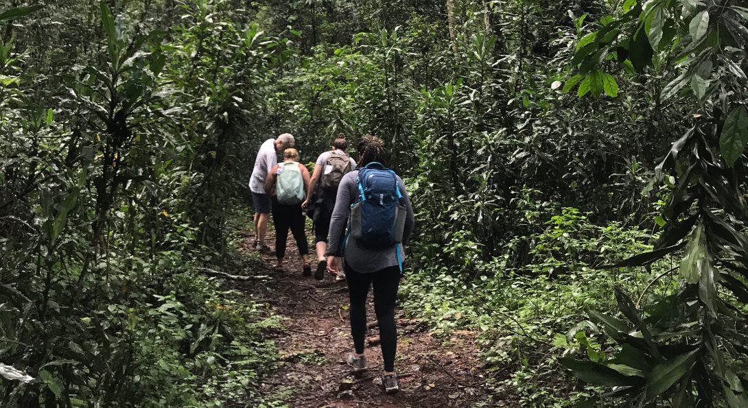 Hiking at Kakamega National Forest