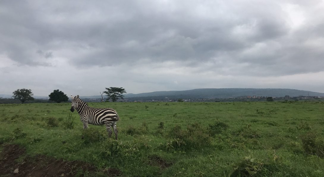 Zebra spotting at Lake Nakuru National Park