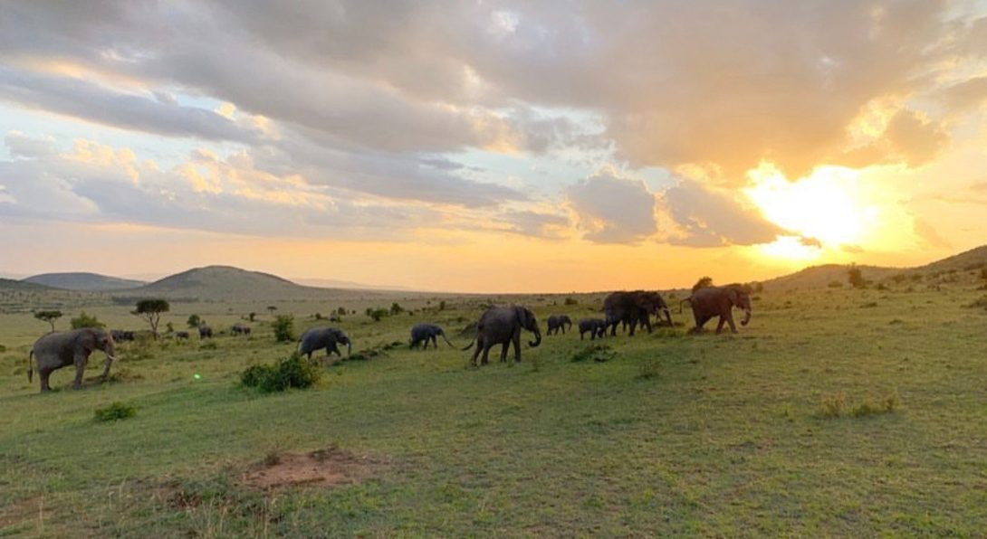 Elephants at Sunset in Masai Mara