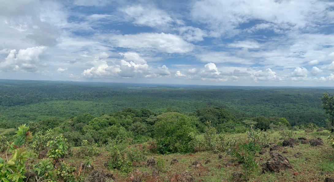 Kakamega Forest