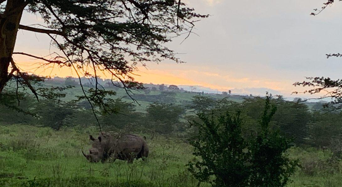 Rhinos in Nukuru