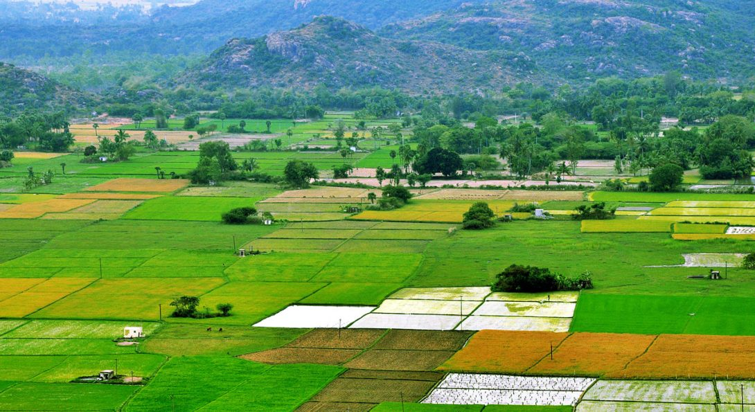 Square plots of farm land in Tamil Nadu, India, with mountains set in the background.